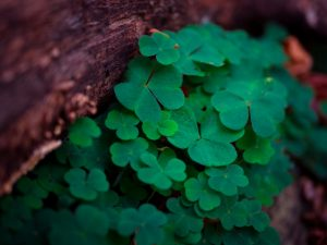 March 2019- St Patrick Day